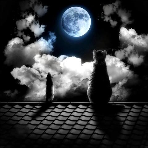 Selon le proverbe, la nuit, ils sont tous gris !