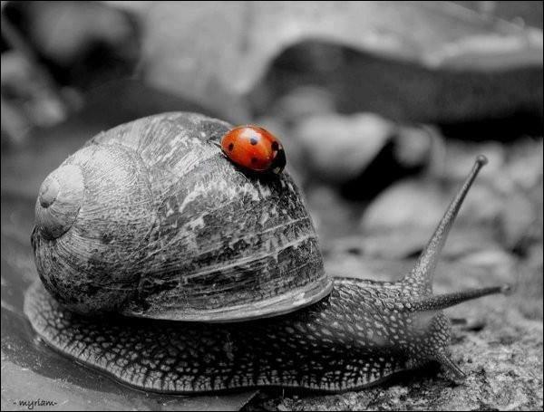 Le petit-gris est-il un escargot ? (Photo décorative)