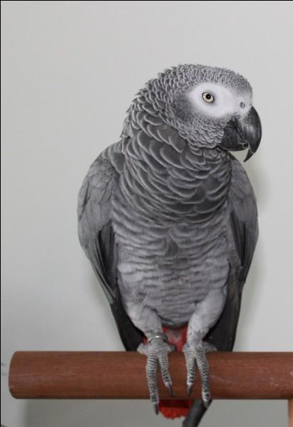 Quel est le nom de ce beau perroquet ?