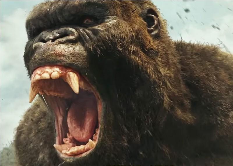 """Qui est l'auteur de """"King Kong"""" ?"""