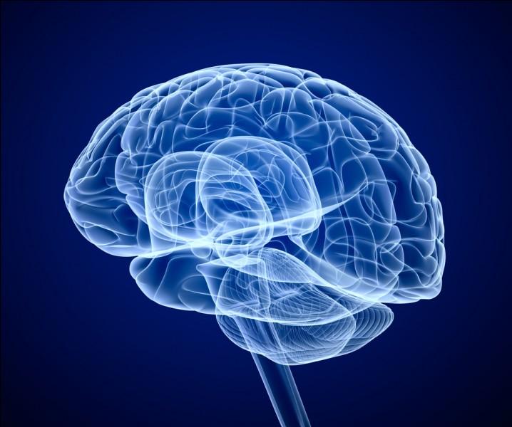 Notre cerveau pèse environ ---