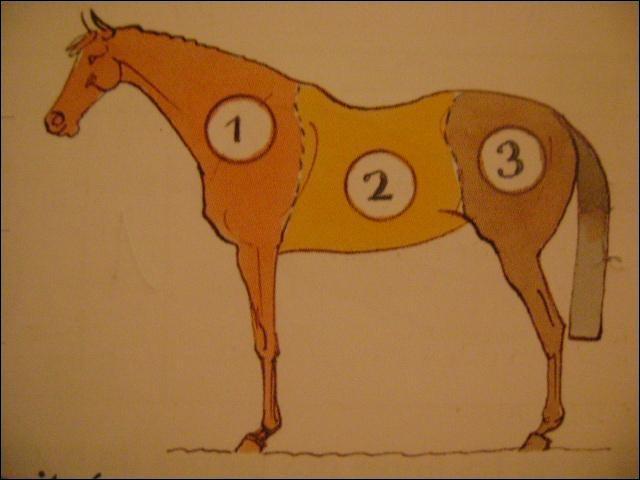 """Comment se nomme la partie notée """"2"""" du cheval ?"""