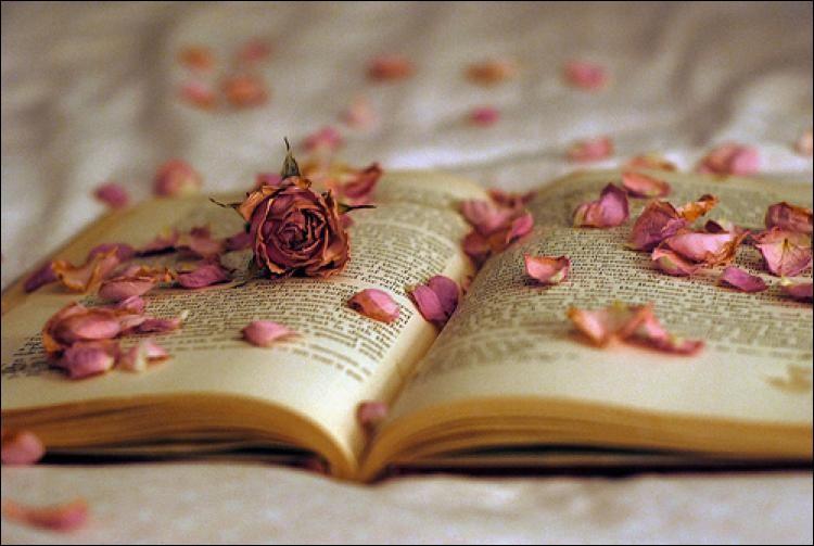 """Qui est l'auteur des vers """"Et rose, elle a vécu ce que vivent les roses, l'espace d'un matin"""" ?"""
