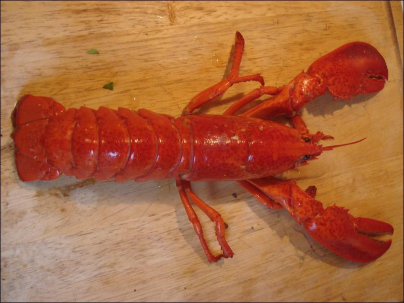 Il n'y a pas de différences visibles entre un homard et une langouste.