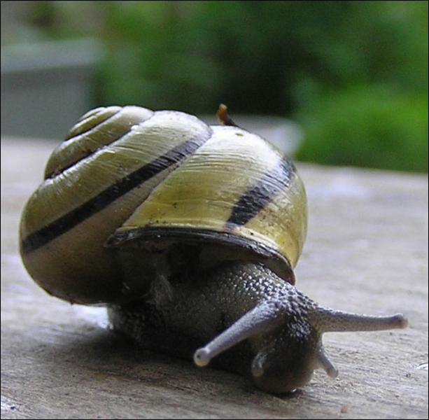 Certains escargots peuvent voler.