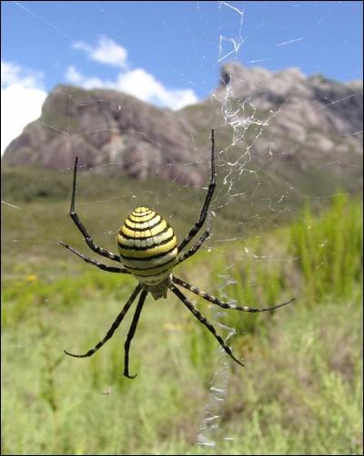 Les araignées n'ont pas d'yeux.