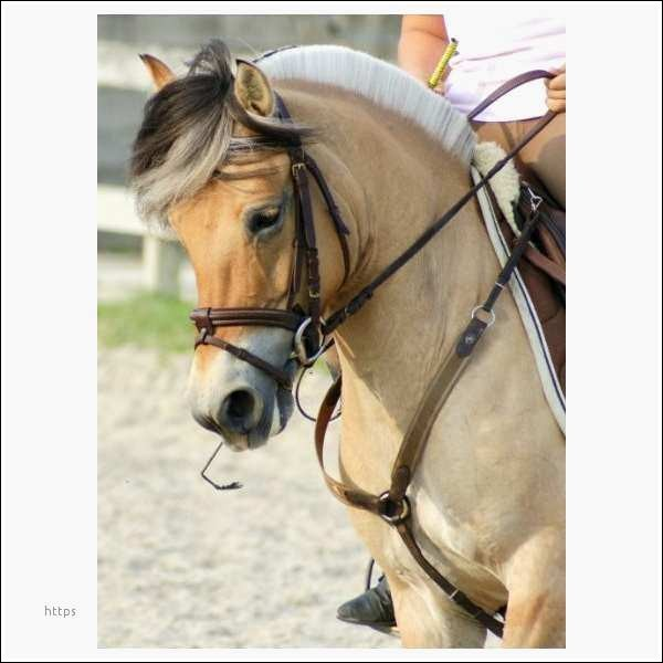 Que porte ce cheval au niveau du poitrail ?