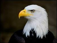 """Pour terminer, comment dit-on """"aigle"""" en italien ?"""
