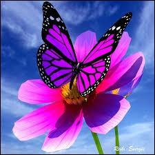 """Comment dit-on """"papillon"""" en italien ?"""