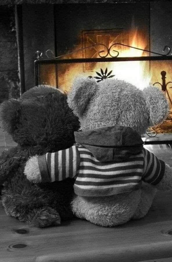 Des histoires d'ours !