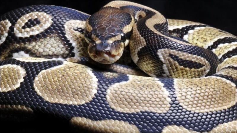 """Comment dit-on """"serpent"""" ?"""