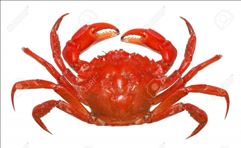"""Comment dit-on """"crabe"""" ?"""