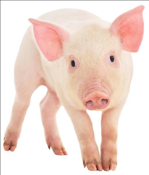 """Comment dit-on """"cochon"""" ?"""