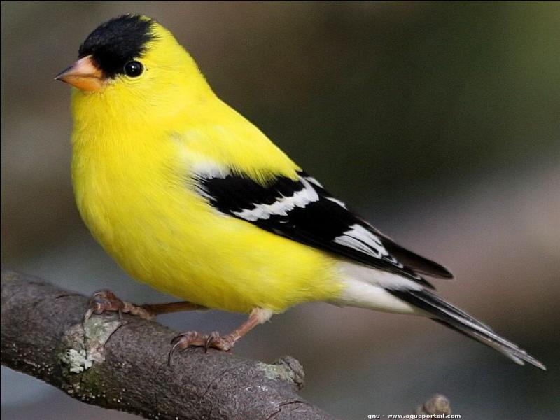 """Comment dit-on """"oiseau"""" ?"""