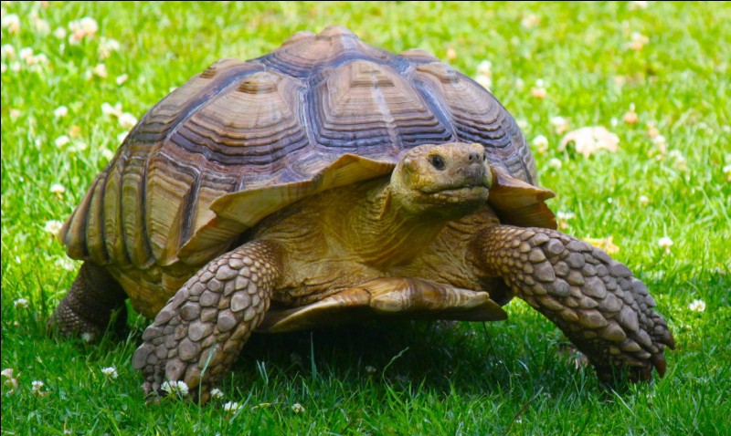 """Comment dit-on """"tortue"""" ?"""