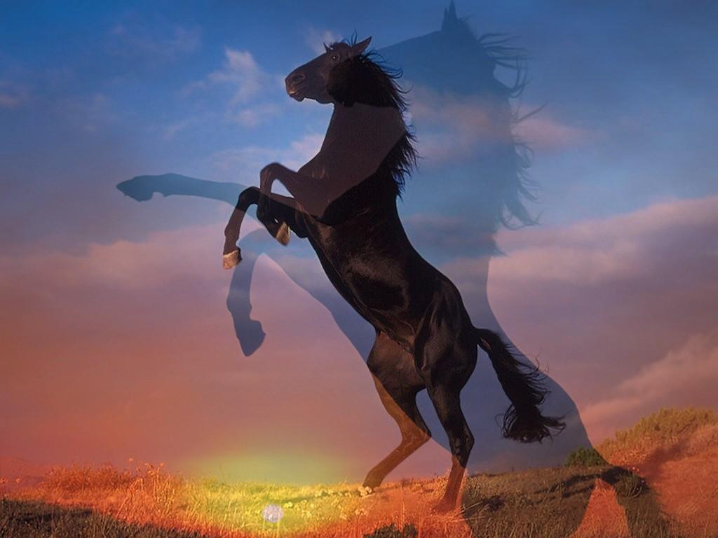 L'équitation pour débutant