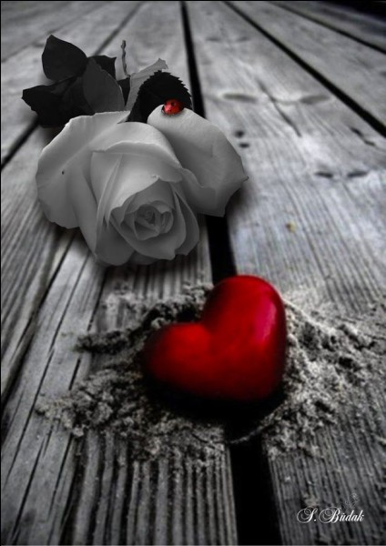 """Qui est l'interprète des paroles """"Mon amour, oublie que je l'aime"""" ?"""