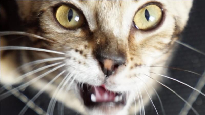 """Lequel de ces youtubeurs possède un chat nommé """"Lua"""" ?"""