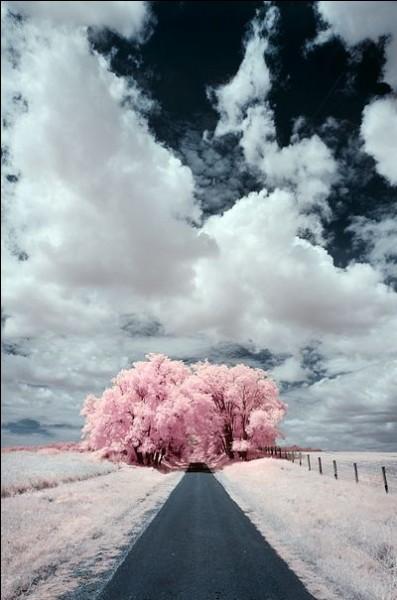 """Qui interprétait les paroles """"Sur la route. dala dala lalalala, la solitude la mauvaiseté, ça fait rêver la liberté"""""""