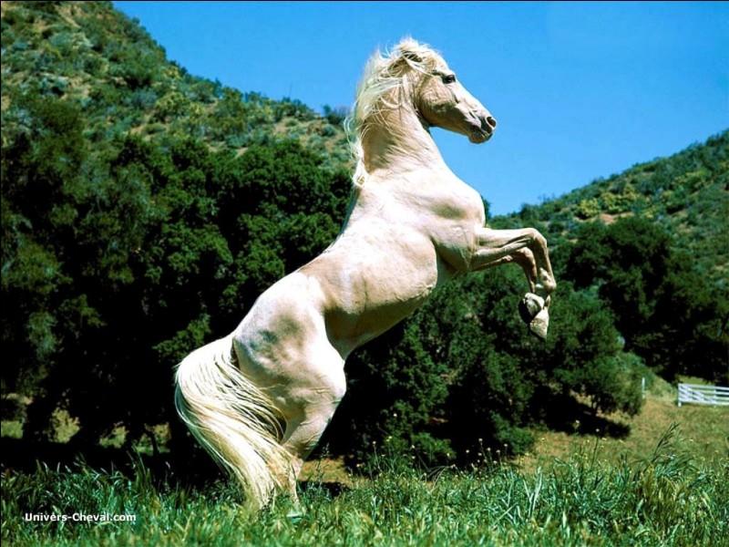 Comme la plupart des quadrupèdes (mais pas tous) le cheval peut se déplacer...