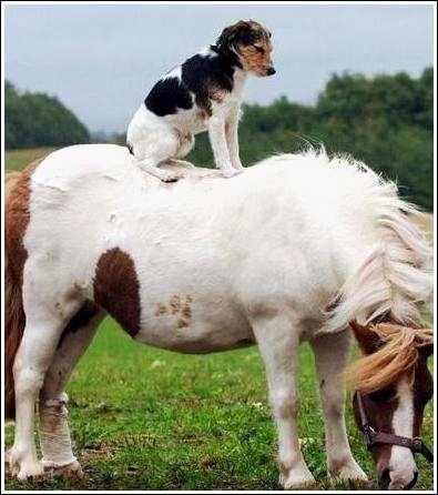 Au milieu du cheval il y a....