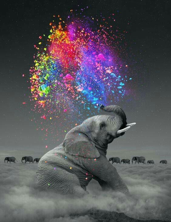 Culture : Testez votre mémoire d'éléphant !