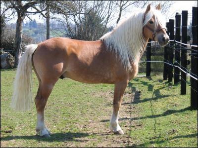 A quelle race appartient ce cheval ?