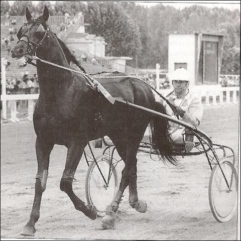 Ce cheval de course est un ...