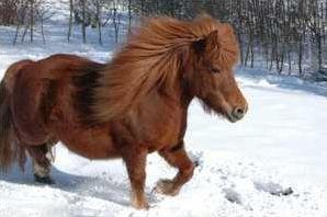 Quizz sur les chevaux