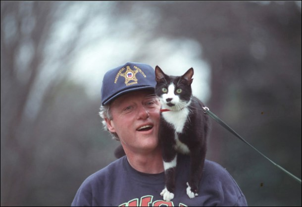 Voici le chat de la famille du président américain Bill Clinton pendant sa présidence. Quel était son nom (chaussettes en anglais) ?