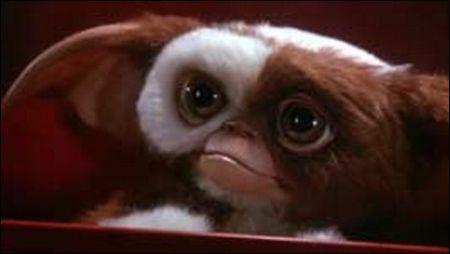 Dans 'Gremlins', qu'est-ce qu'il ne faut surtout pas faire avec un Mogwaï ?