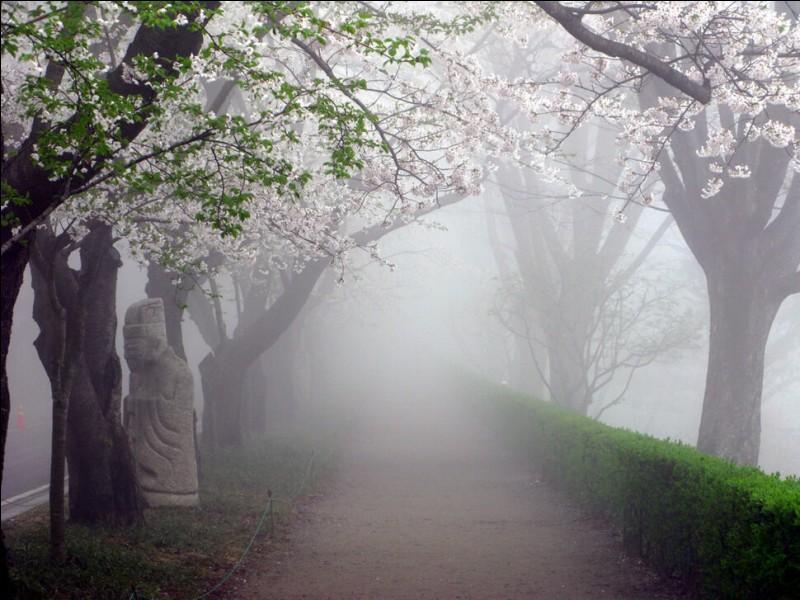 Quelle est la saison la plus propice aux formations de brouillard ? (photo uniquement décorative)