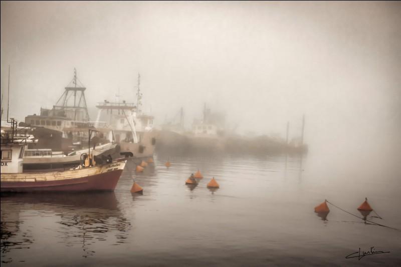 """Qui a écrit le roman policier """"Brouillard au port de Tolbiac"""" ?"""