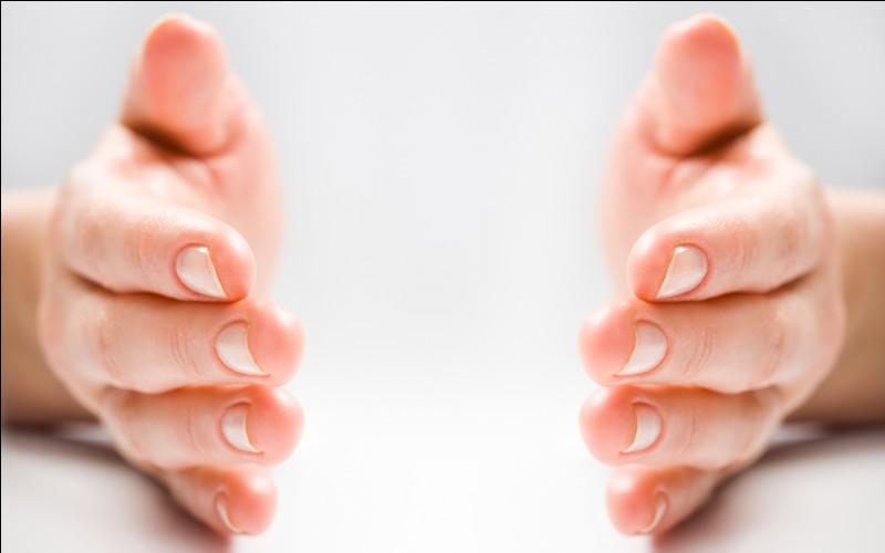 """A quelle partie du corps correspond le mot """"mano"""" ?"""