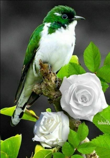 """Qui chantait """"ça vous rend libre comme l'oiseau, ça vous libère de tous les mots, ça vous libère de tous les maux"""" ?"""