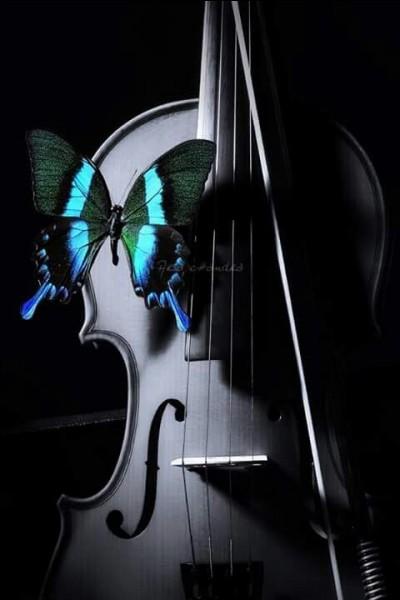"""De qui sont les paroles """"Je t'envoie comme un papillon à l'étoile, quelques mots d'amour"""" ?"""