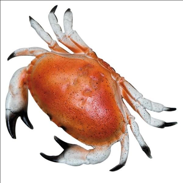 Il a un crabe tatoué sur son bras