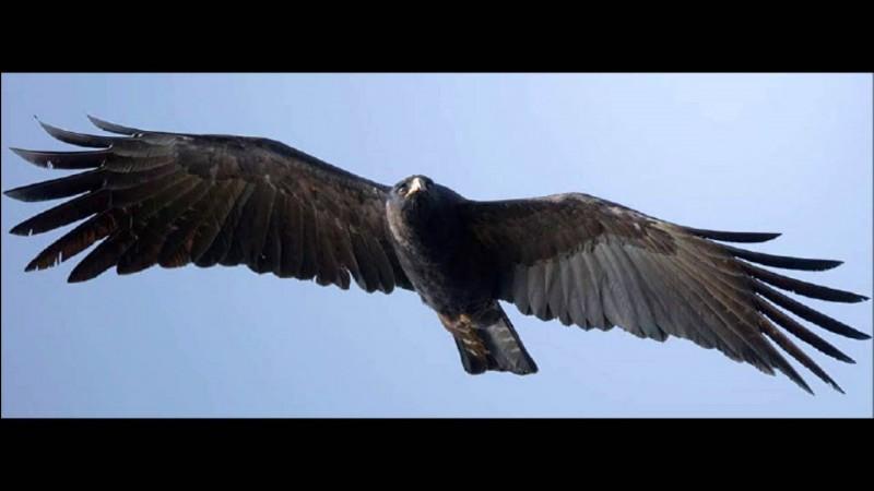 """Qui interprétait """"L'Aigle noir"""", célébrissime chanson sortie en 1970 ?"""