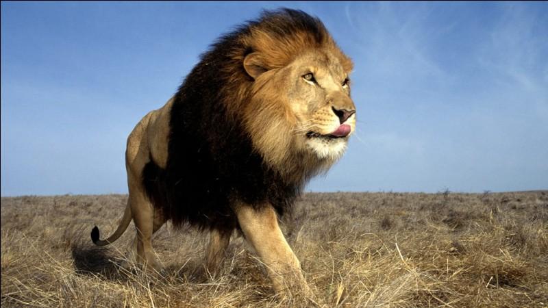 """En 1992, quel groupe chantait """"Le lion est mort ce soir """" ?"""