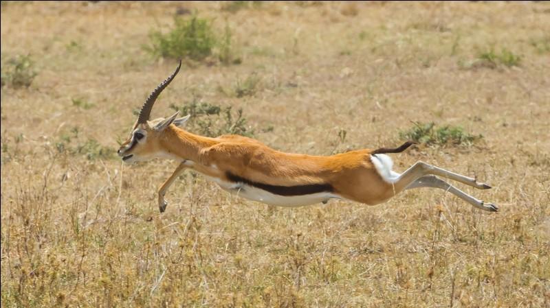 En 1984, qui se demande où sont passées les gazelles ?
