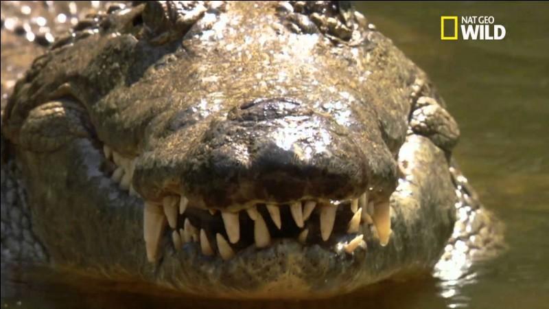 En 1981, quel groupe se demande qui va garder leur crocodile l'été ?