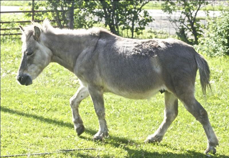 Quel est cet animal hybride (en photo) issu du croisement d'un cheval et d'une ânesse ?