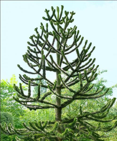Quel est cet arbre appelé aussi ''arbre à singes'' ?
