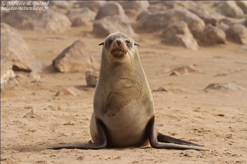 Quel est cet animal de la classe des mammifères carnivores ?