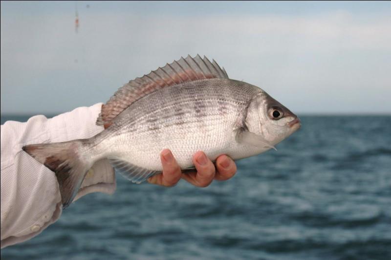 Quel poisson vous est présenté sur la photo ?