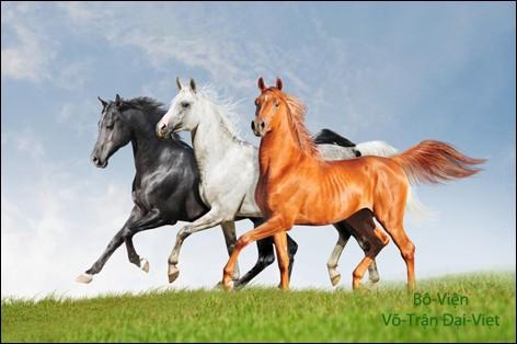Qu'êtes-vous si vous avez la passion des chevaux ?