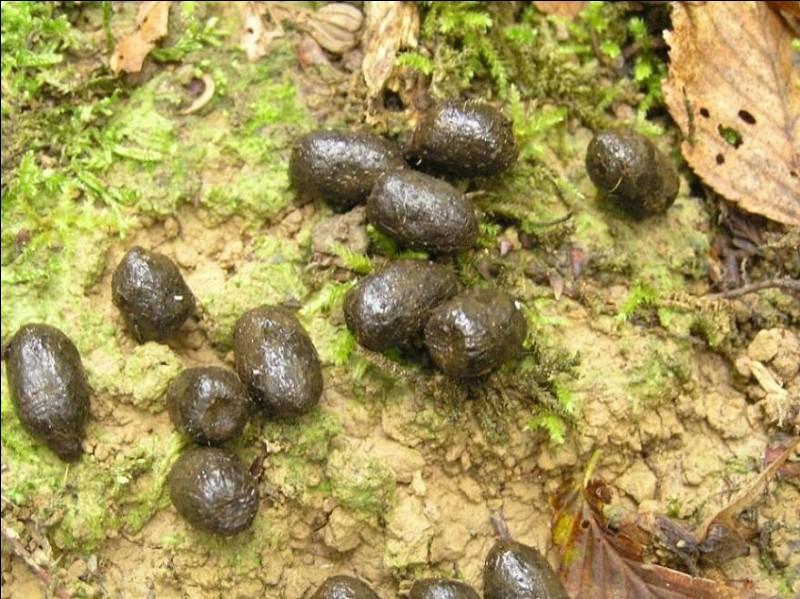 Comment appelle-t-on une crotte de chevreuil ?