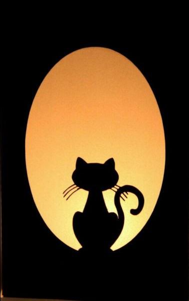 Dans l'Islam le chat a une image :