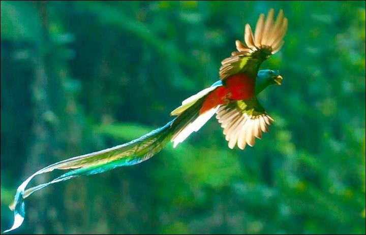De quel pays d'Amérique centrale le quetzal est-il à la fois le nom de la monnaie et l'oiseau national ?
