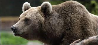Où sont apparus les ours, il y a environ 35 millions d'années ?
